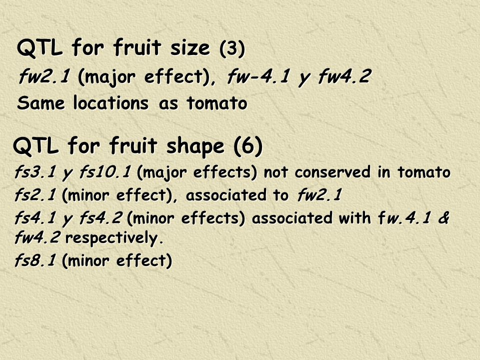 QTL for fruit size (3) fw2.1 (major effect), fw-4.1 y fw4.2 Same locations as tomato QTL for fruit shape (6) fs3.1 y fs10.1 (major effects) not conserved in tomato fs2.1 (minor effect), associated to fw2.1 fs4.1 y fs4.2 (minor effects) associated with fw.4.1 & fw4.2 respectively.
