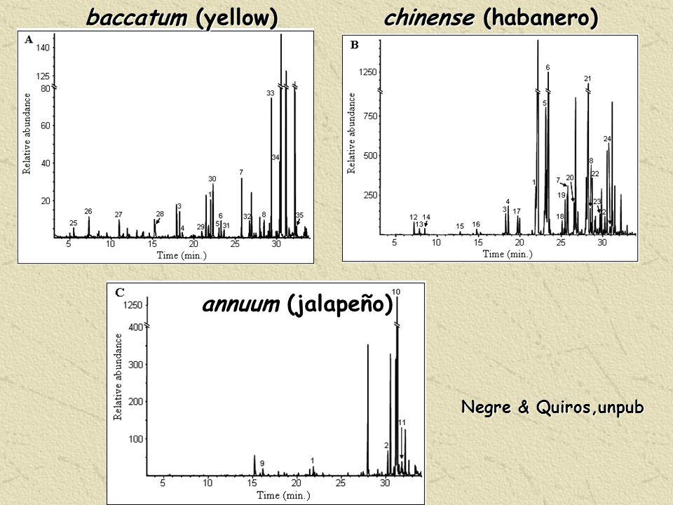 baccatum (yellow) chinense (habanero) annuum (jalapeño) Negre & Quiros,unpub