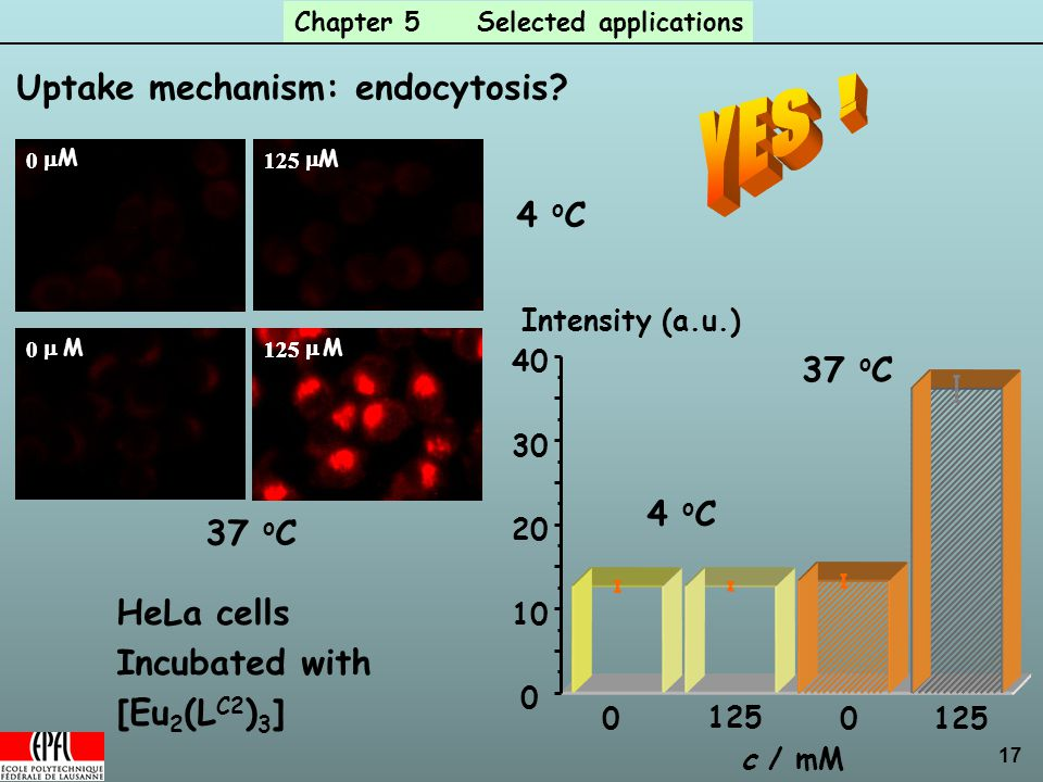 17 Chapter 5 Selected applications Uptake mechanism: endocytosis.