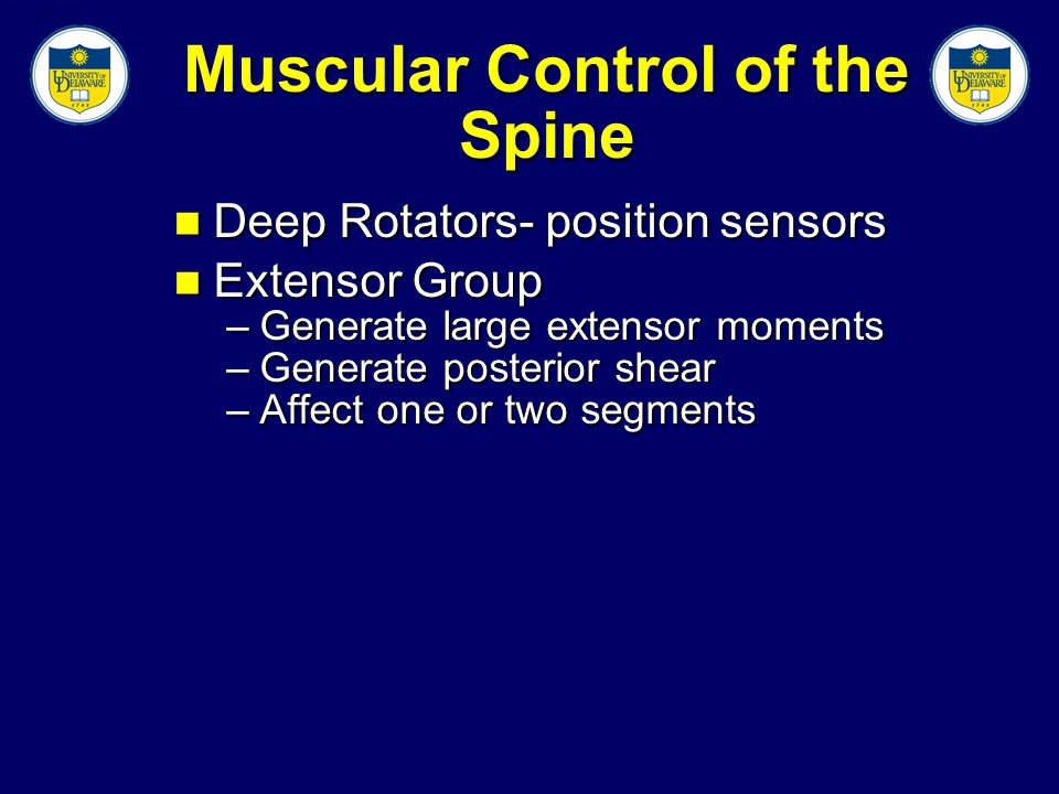 Slide 22 Muscular Control of the Spine Deep Rotators- position sensors Deep Rotators- position sensors Extensor Group Extensor Group –Generate large extensor moments –Generate posterior shear –Affect one or two segments