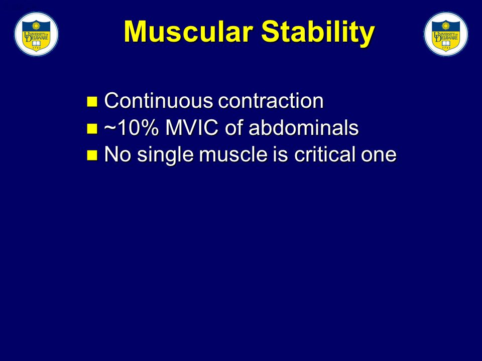 Slide 24 Muscular Stability Continuous contraction Continuous contraction ~10% MVIC of abdominals ~10% MVIC of abdominals No single muscle is critical one No single muscle is critical one