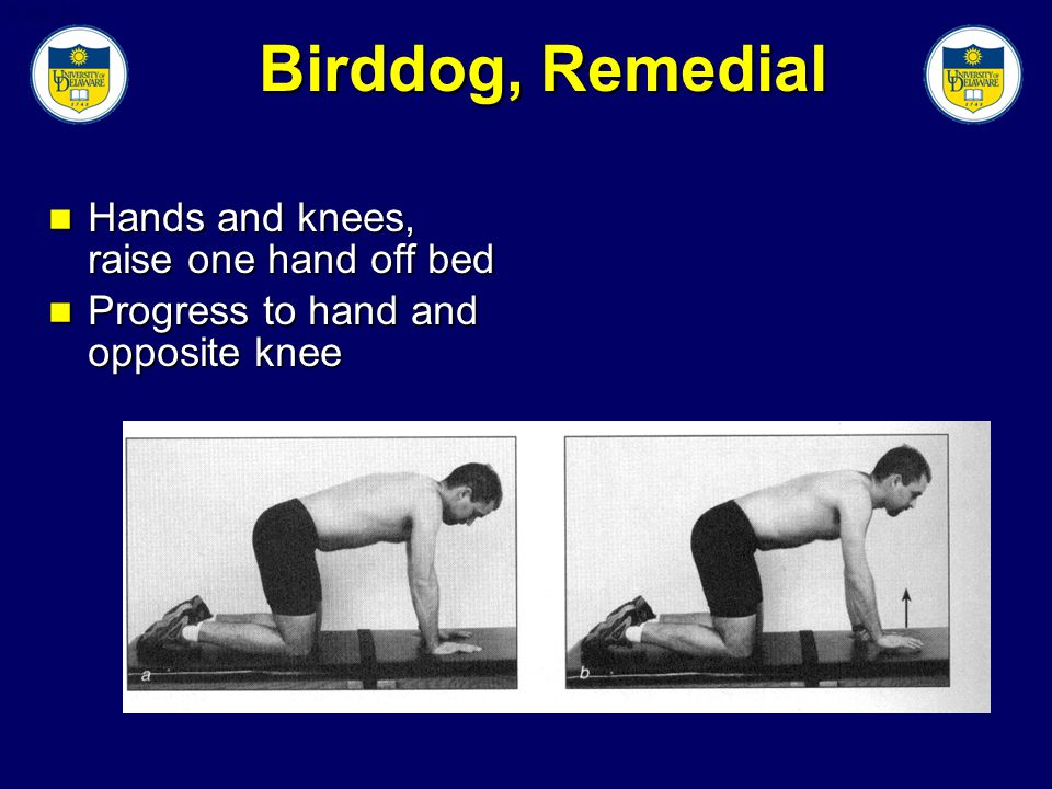 Slide 38 Birddog, Remedial Hands and knees, raise one hand off bed Hands and knees, raise one hand off bed Progress to hand and opposite knee Progress to hand and opposite knee