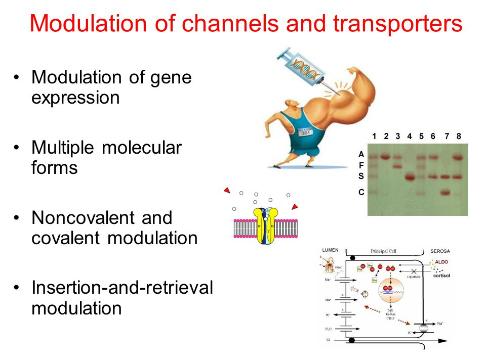 Modulation of channels and transporters Modulation of gene expression Multiple molecular forms Noncovalent and covalent modulation Insertion-and-retrieval modulation