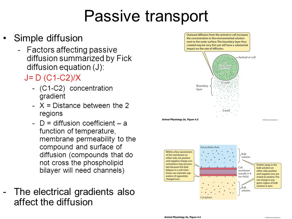 Passive transport Simple diffusion -Factors affecting passive diffusion summarized by Fick diffusion equation (J): J= D (C1-C2)/X -(C1-C2) concentration gradient -X = Distance between the 2 regions -D = diffusion coefficient – a function of temperature, membrane permeability to the compound and surface of diffusion (compounds that do not cross the phospholipid bilayer will need channels) -The electrical gradients also affect the diffusion