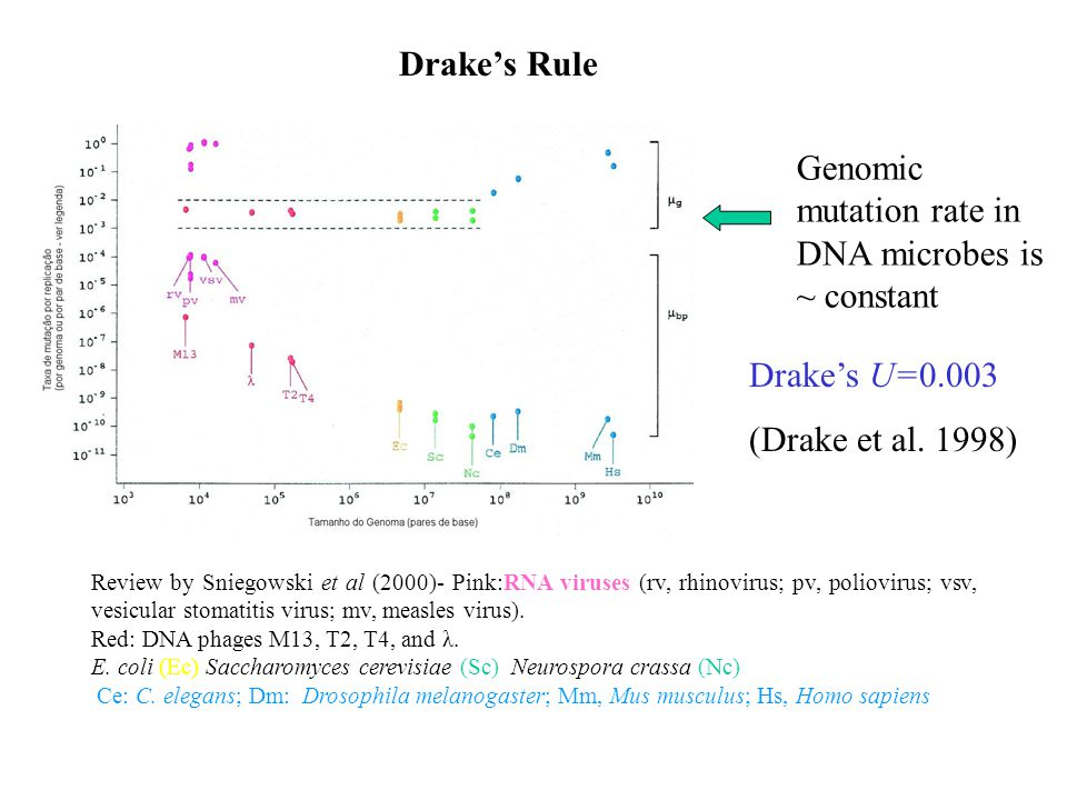 Drake's Rule Genomic mutation rate in DNA microbes is ~ constant Drake's U=0.003 (Drake et al.