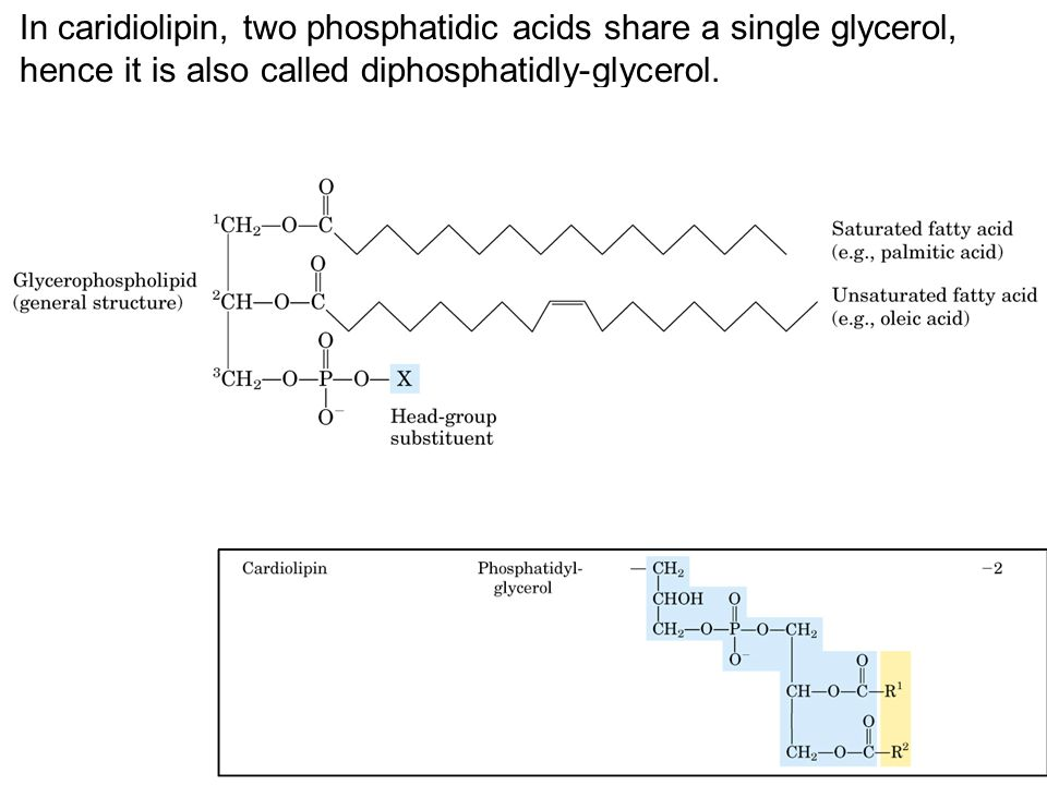 GANGLIOSIDES ARE DEGRADED BY A SET OF LYSOSOMAL ENZYMES GLUCOSYLCEREBROSIDE A GLOBOSIDE LACTOSYLCERAMIDE A