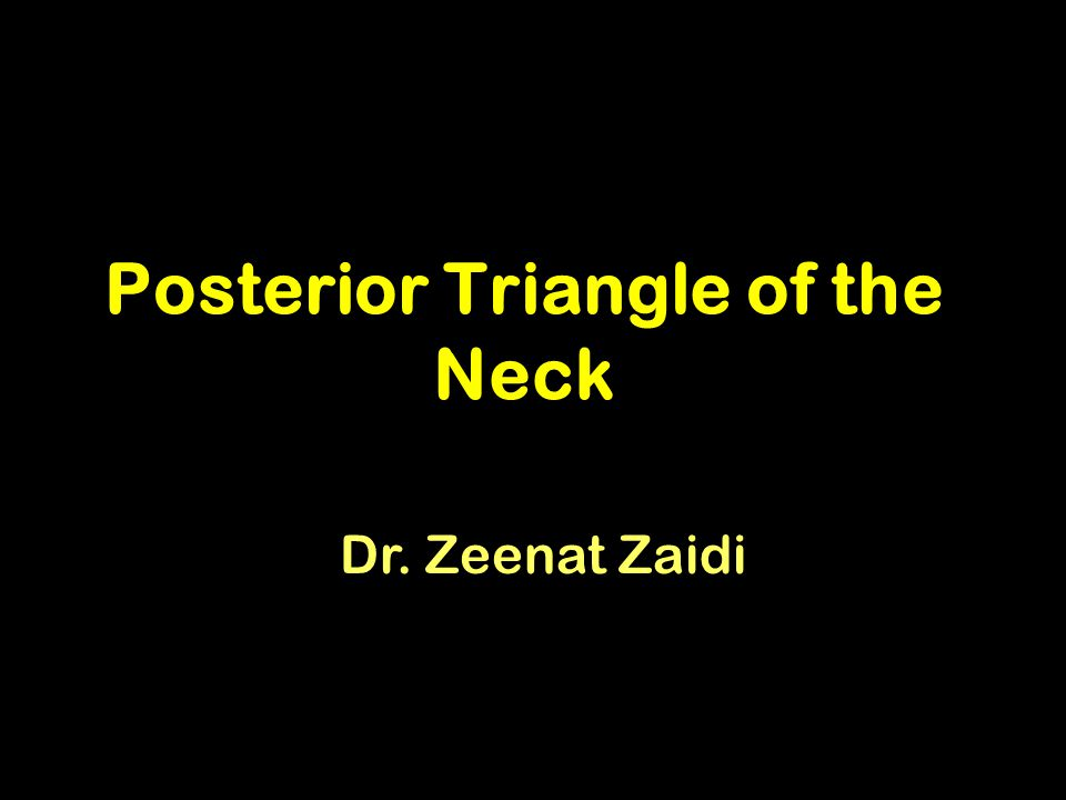 Posterior Triangle of the Neck Dr. Zeenat Zaidi