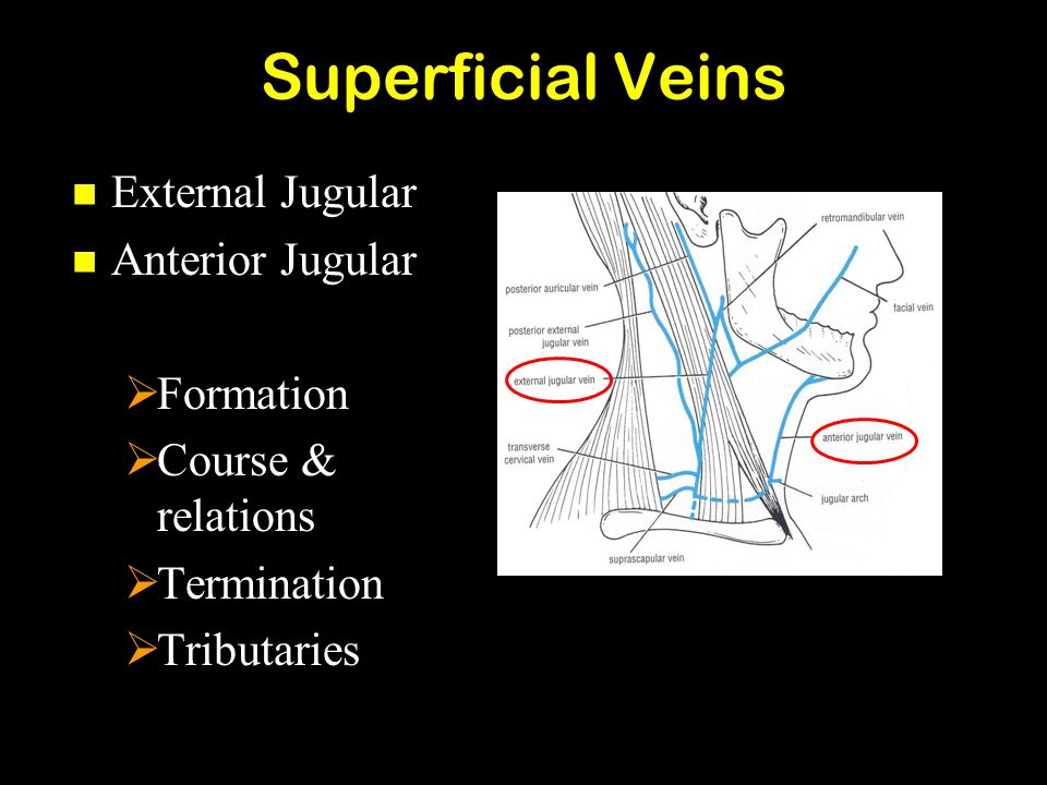Superficial Veins External Jugular External Jugular Anterior Jugular Anterior Jugular  Formation  Course & relations  Termination  Tributaries