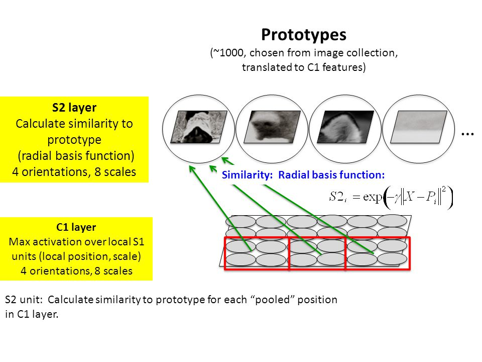 S2 layer Calculate similarity to prototype (radial basis function) 4 orientations, 8 scales … Prototypes (~1000, chosen from image collection, transla