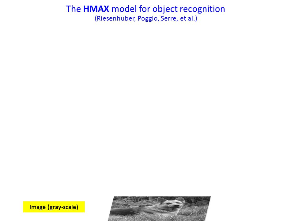 The HMAX model for object recognition (Riesenhuber, Poggio, Serre, et al.) Image (gray-scale)