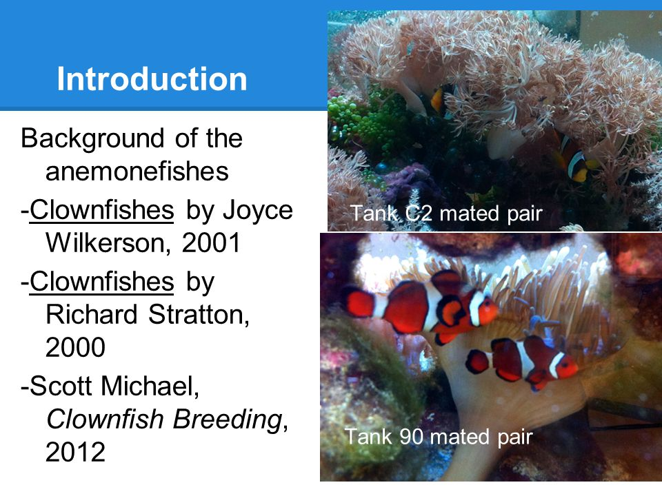Introduction Background of the anemonefishes -Clownfishes by Joyce Wilkerson, 2001 -Clownfishes by Richard Stratton, 2000 -Scott Michael, Clownfish Breeding, 2012 Tank 90 mated pair Tank C2 mated pair