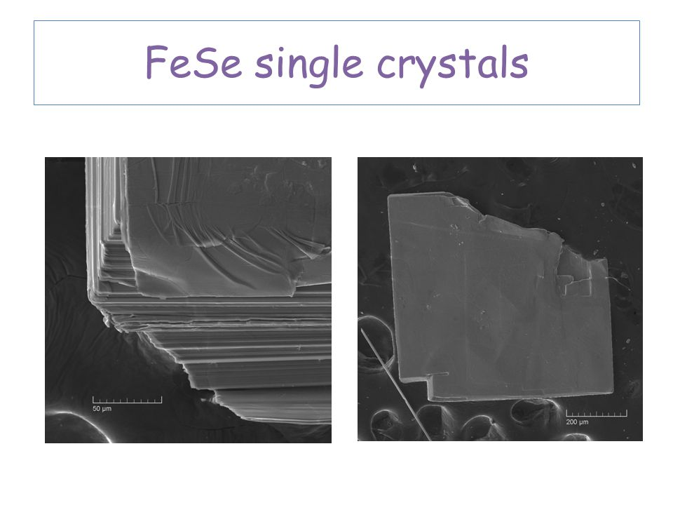 FeSe single crystals