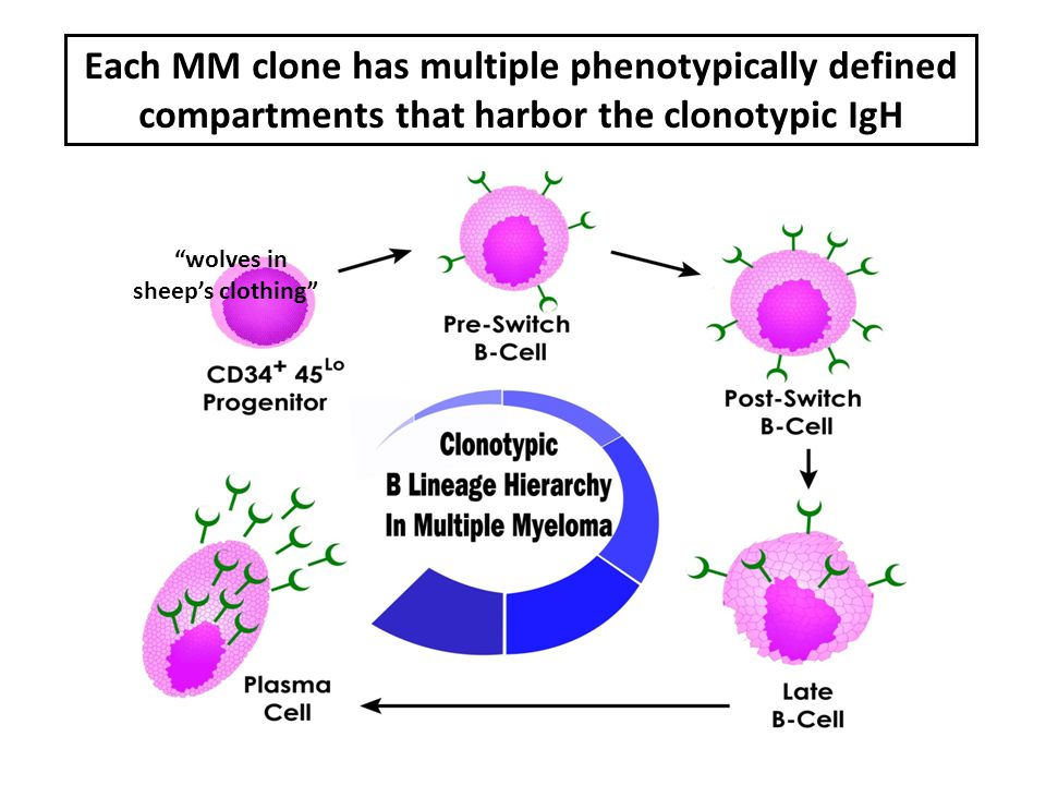 """Each MM clone has multiple phenotypically defined compartments that harbor the clonotypic IgH """"wolves in sheep's clothing"""""""