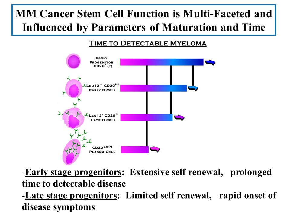 MM Cancer Stem Cell Function is Multi-Faceted and Influenced by Parameters of Maturation and Time -Early stage progenitors: Extensive self renewal, pr