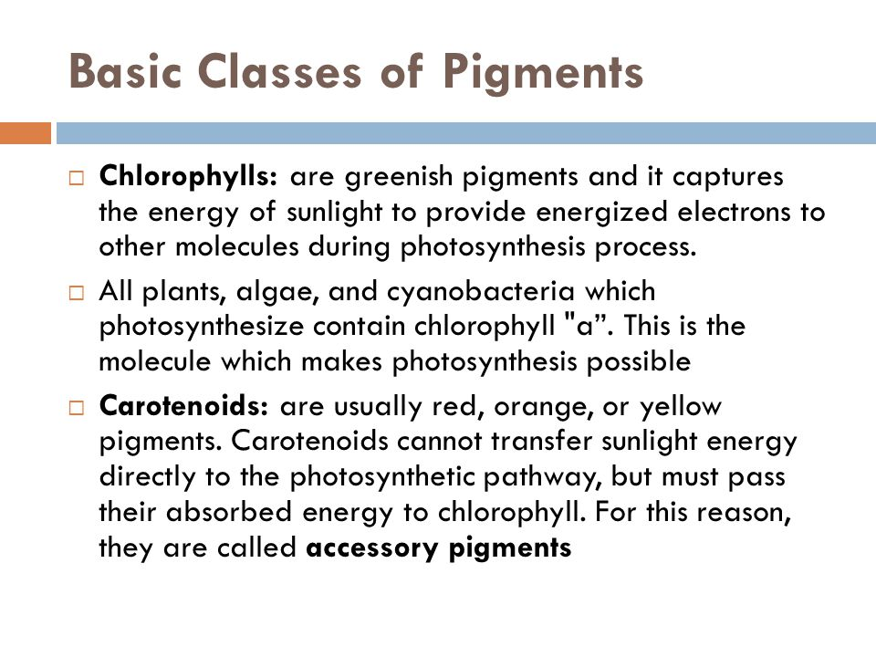 Basic Classes of Pigments  Chlorophylls: are greenish pigments and it captures the energy of sunlight to provide energized electrons to other molecules during photosynthesis process.