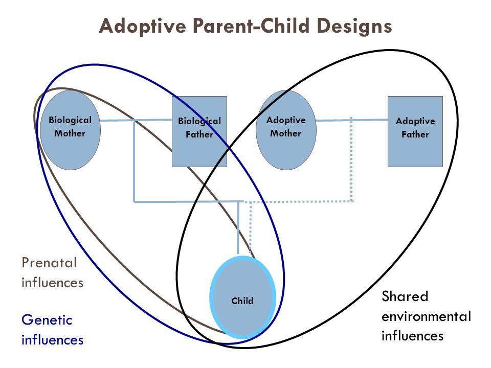 Prenatal influences Child Biological Mother Biological Father Adoptive Mother Adoptive Father Genetic influences Shared environmental influences Adoptive Parent-Child Designs
