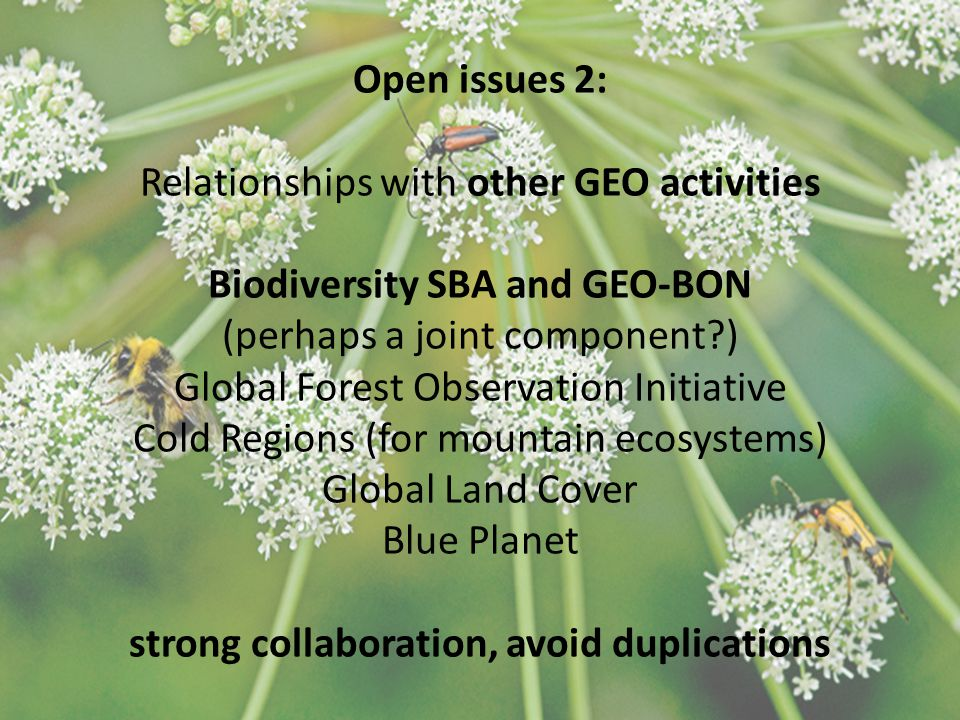 Open issues 2: Relationships with other GEO activities Biodiversity SBA and GEO-BON (perhaps a joint component ) Global Forest Observation Initiative Cold Regions (for mountain ecosystems) Global Land Cover Blue Planet strong collaboration, avoid duplications