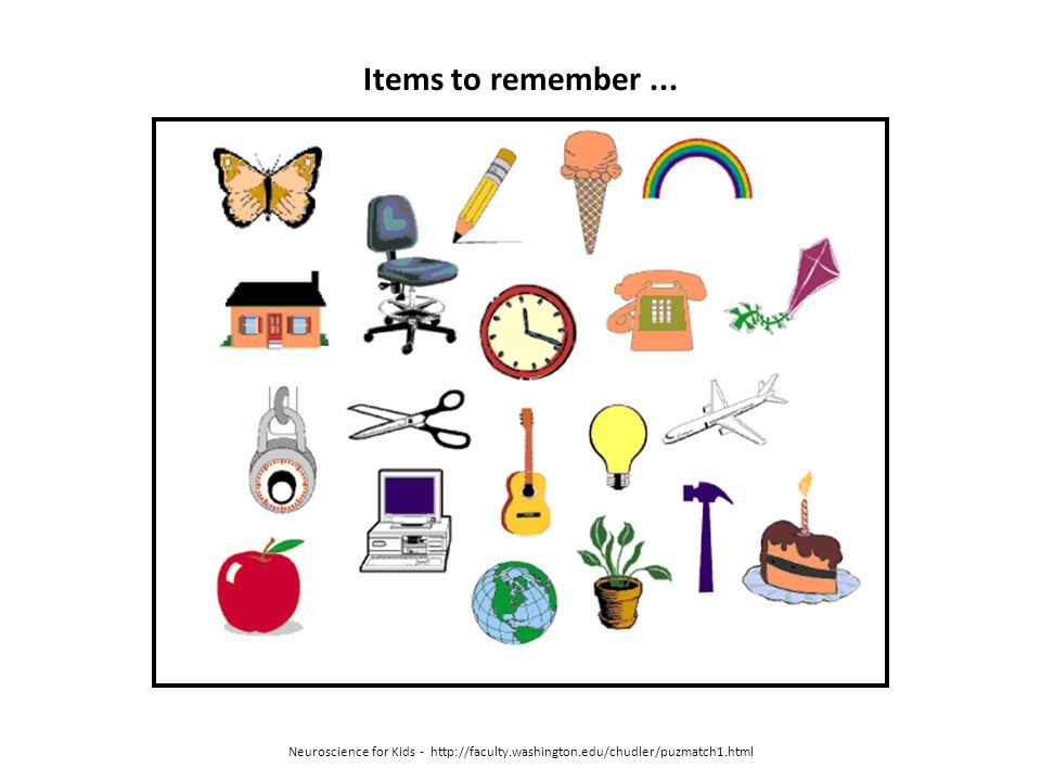 Neuroscience for Kids - http://faculty.washington.edu/chudler/puzmatch1.html Items to remember...
