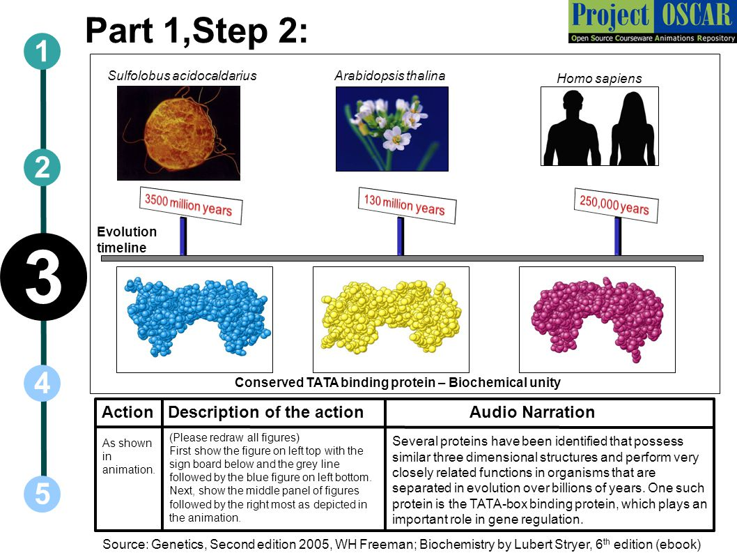 Part 3,Step 3: Action Audio Narration 1 5 3 2 4 Description of the action Integral protein Plasma membrane Periplasmic space Peptidoglycan Outer membrane Lipopolysaccharide Porins Gram negative bacteria have a more complex cell wall.