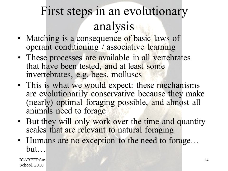 ICABEEP Summer School, 2010 Stephen Lea14 First steps in an evolutionary analysis Matching is a consequence of basic laws of operant conditioning / associative learning These processes are available in all vertebrates that have been tested, and at least some invertebrates, e.g.