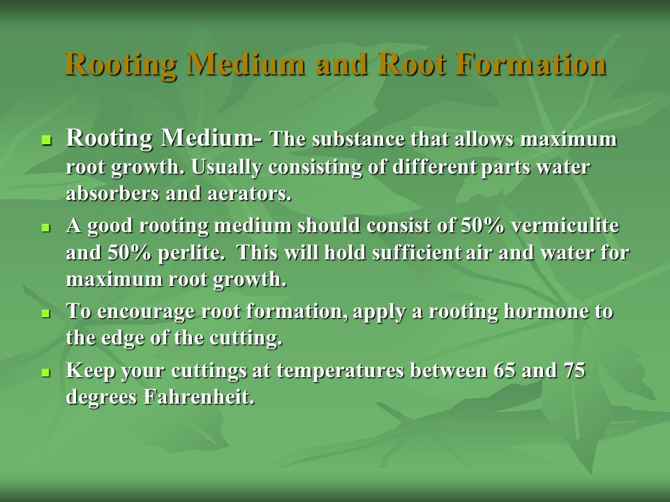 Rooting Medium and Root Formation Rooting Medium- The substance that allows maximum root growth. Usually consisting of different parts water absorbers