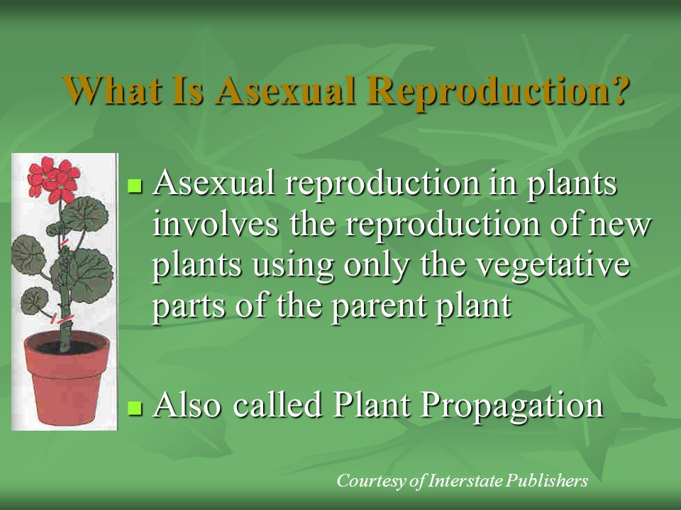 What Is Asexual Reproduction? Asexual reproduction in plants involves the reproduction of new plants using only the vegetative parts of the parent pla