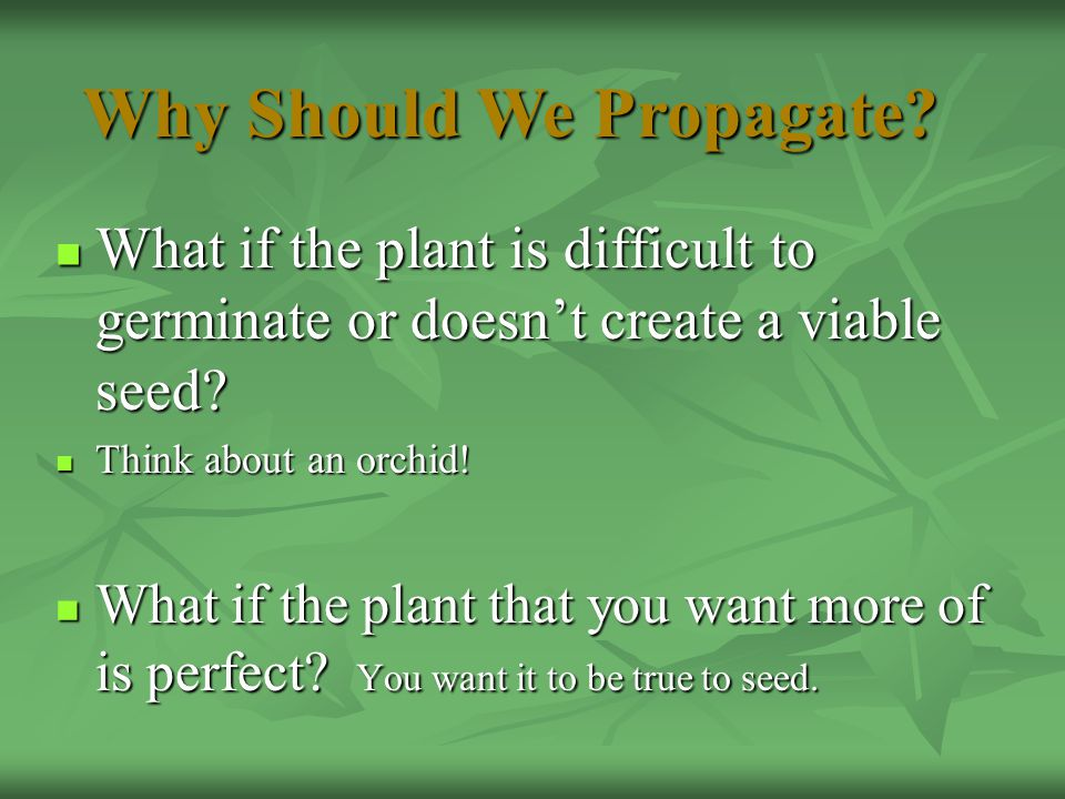 What if the plant is difficult to germinate or doesn't create a viable seed? What if the plant is difficult to germinate or doesn't create a viable se