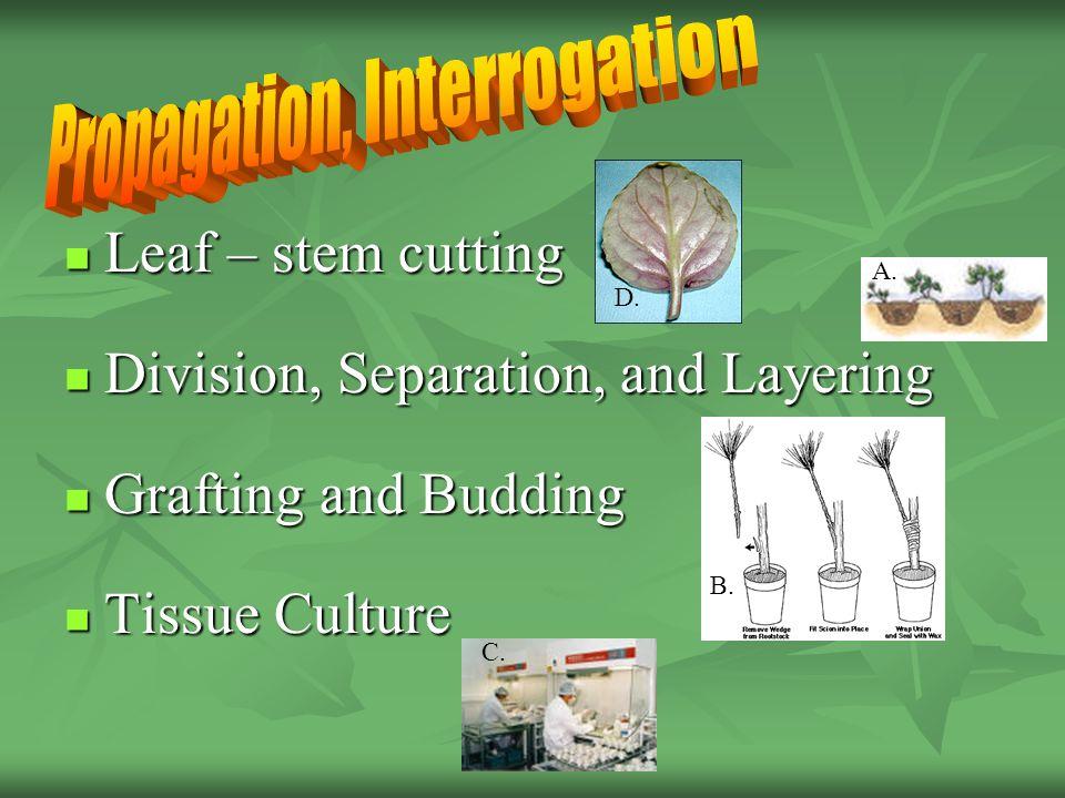 Leaf – stem cutting Leaf – stem cutting Division, Separation, and Layering Division, Separation, and Layering Grafting and Budding Grafting and Budding Tissue Culture Tissue Culture D.