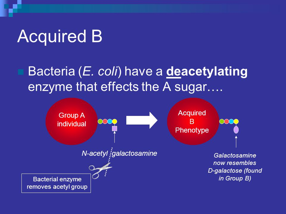 Acquired B Bacteria (E. coli) have a deacetylating enzyme that effects the A sugar…. Group A individual N-acetyl galactosamine Acquired B Phenotype Ba