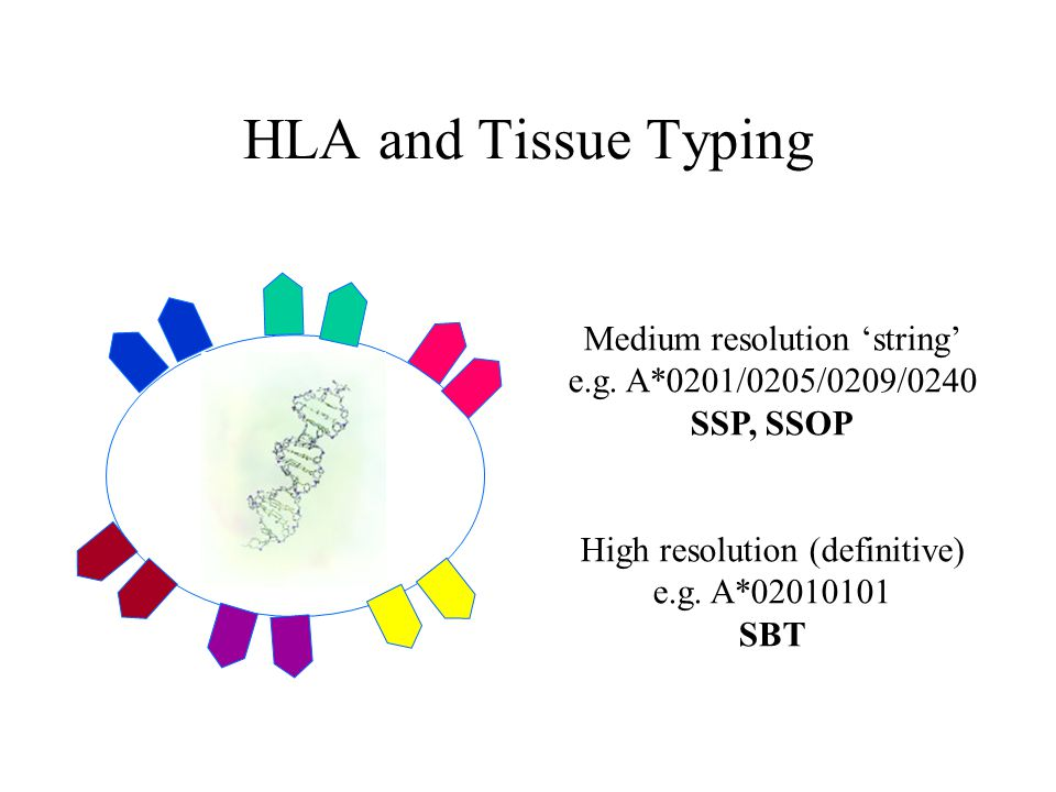 HLA and Tissue Typing Cell Medium resolution 'string' e.g. A*0201/0205/0209/0240 SSP, SSOP High resolution (definitive) e.g. A*02010101 SBT