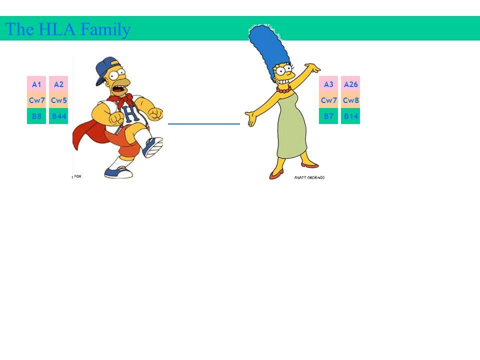 The HLA Family A1 Cw7 B8 A1A2 Cw7Cw5 B8B44 A3A26 Cw7Cw8 B7B14 A3 Cw7 B7
