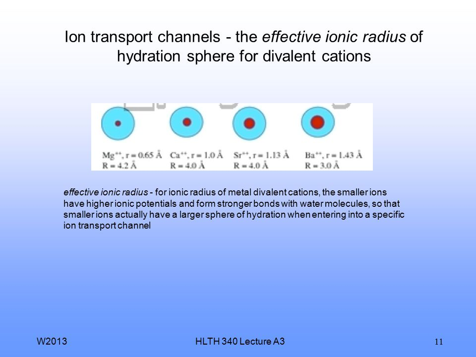 HLTH 340 Lecture A3W2013 11 Ion transport channels - the effective ionic radius of hydration sphere for divalent cations effective ionic radius - for ionic radius of metal divalent cations, the smaller ions have higher ionic potentials and form stronger bonds with water molecules, so that smaller ions actually have a larger sphere of hydration when entering into a specific ion transport channel