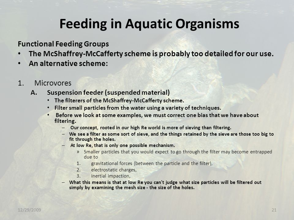 Feeding in Aquatic Organisms Functional Feeding Groups The McShaffrey-McCafferty scheme is probably too detailed for our use.