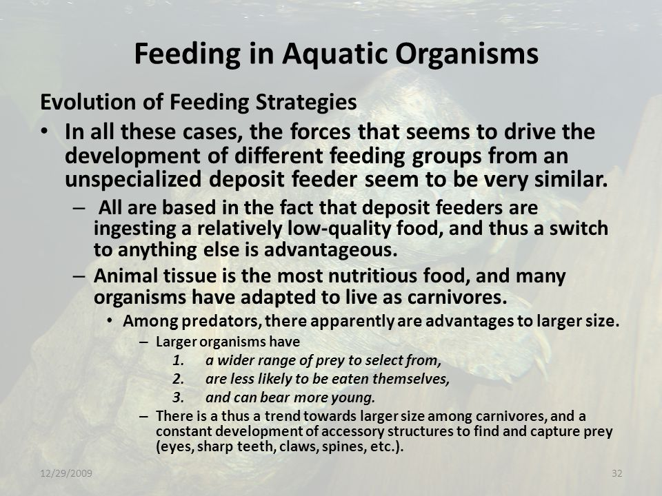Feeding in Aquatic Organisms Evolution of Feeding Strategies In all these cases, the forces that seems to drive the development of different feeding groups from an unspecialized deposit feeder seem to be very similar.