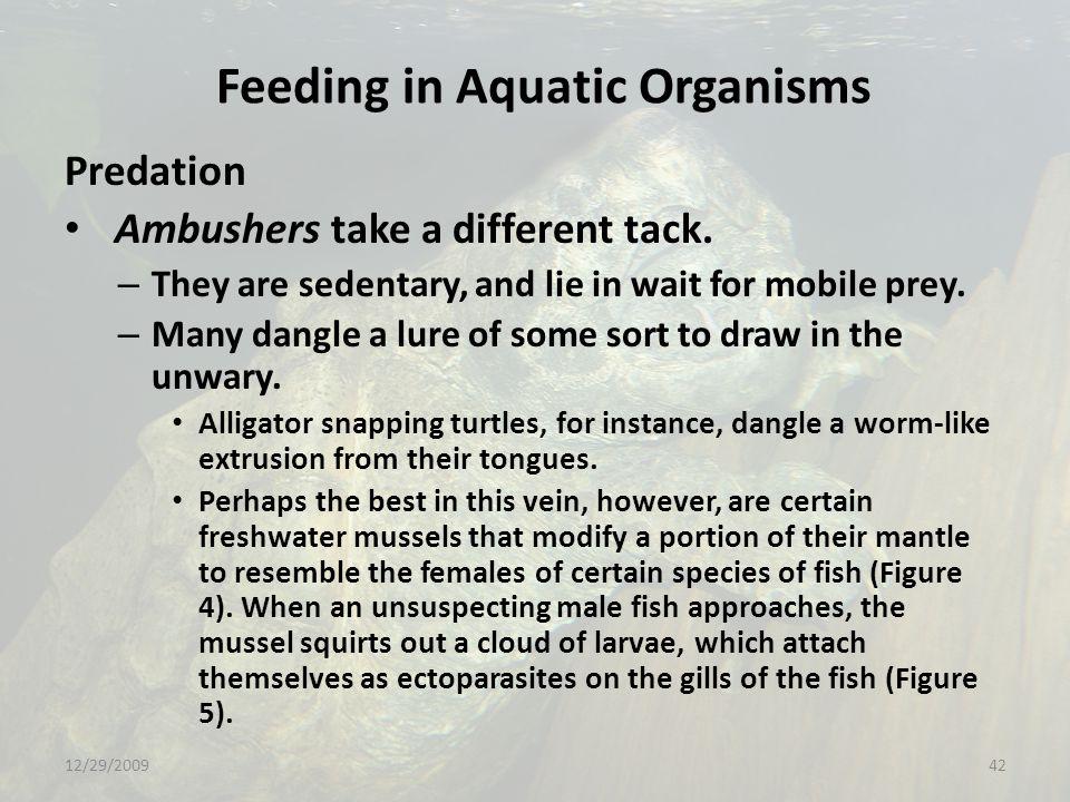Feeding in Aquatic Organisms Predation Ambushers take a different tack.