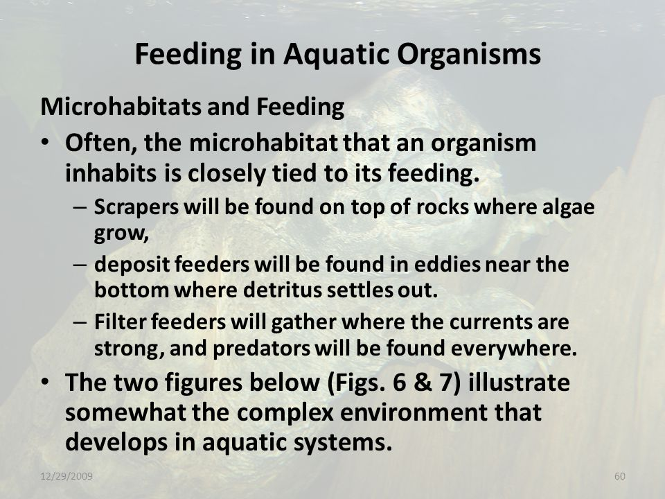 Feeding in Aquatic Organisms Microhabitats and Feeding Often, the microhabitat that an organism inhabits is closely tied to its feeding.