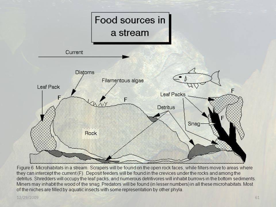 12/29/200961 Figure 6.Microhabitats in a stream.