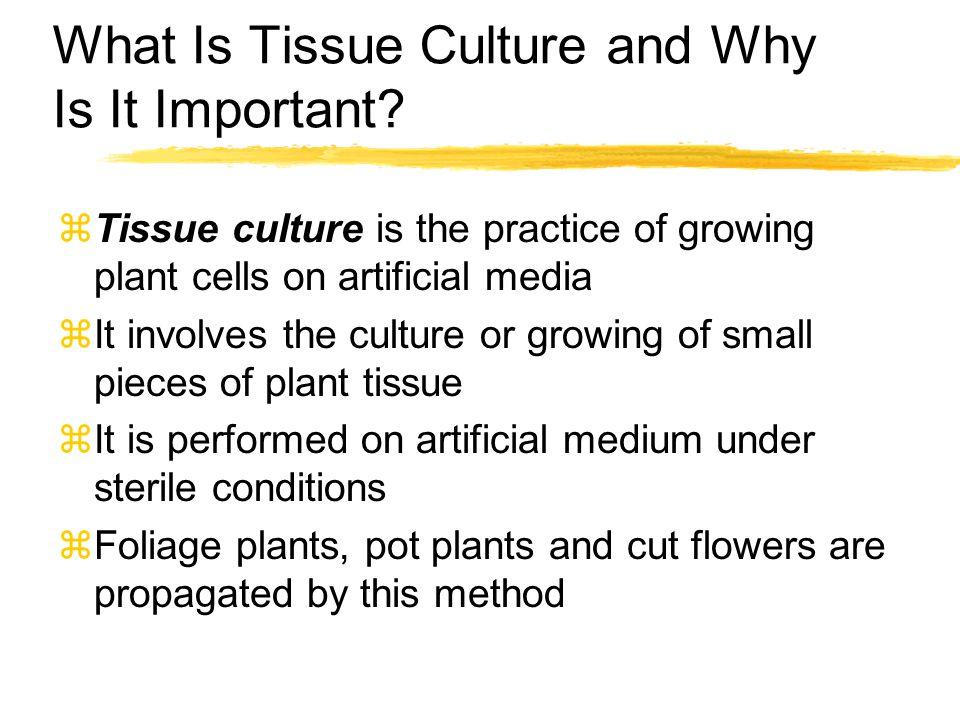 Advantages of Tissue Culture z1.