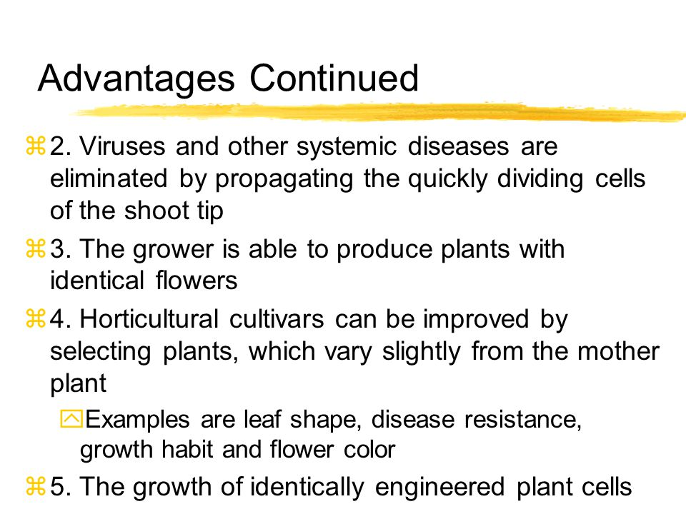 What Process Is Used For Tissue Culture Propagation.