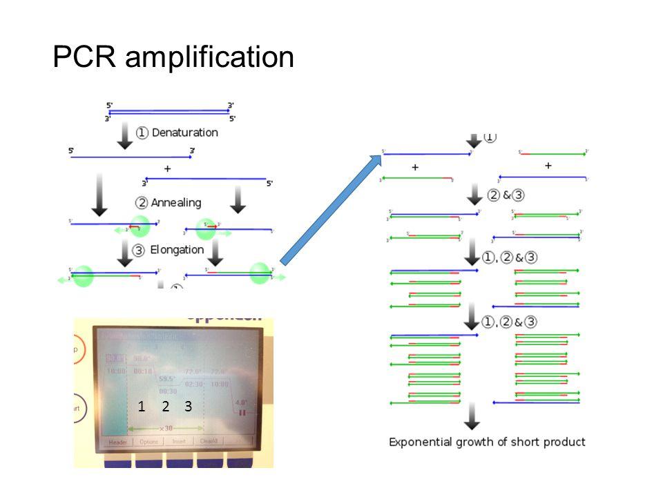PCR amplification 123