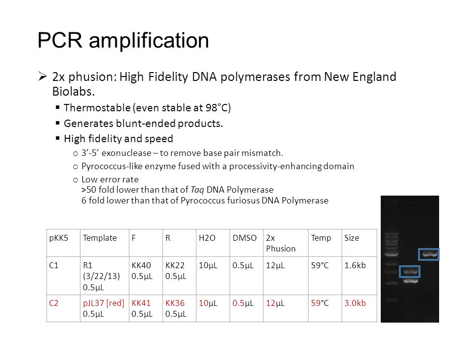  2x phusion: High Fidelity DNA polymerases from New England Biolabs.  Thermostable (even stable at 98°C)  Generates blunt-ended products.  High fi