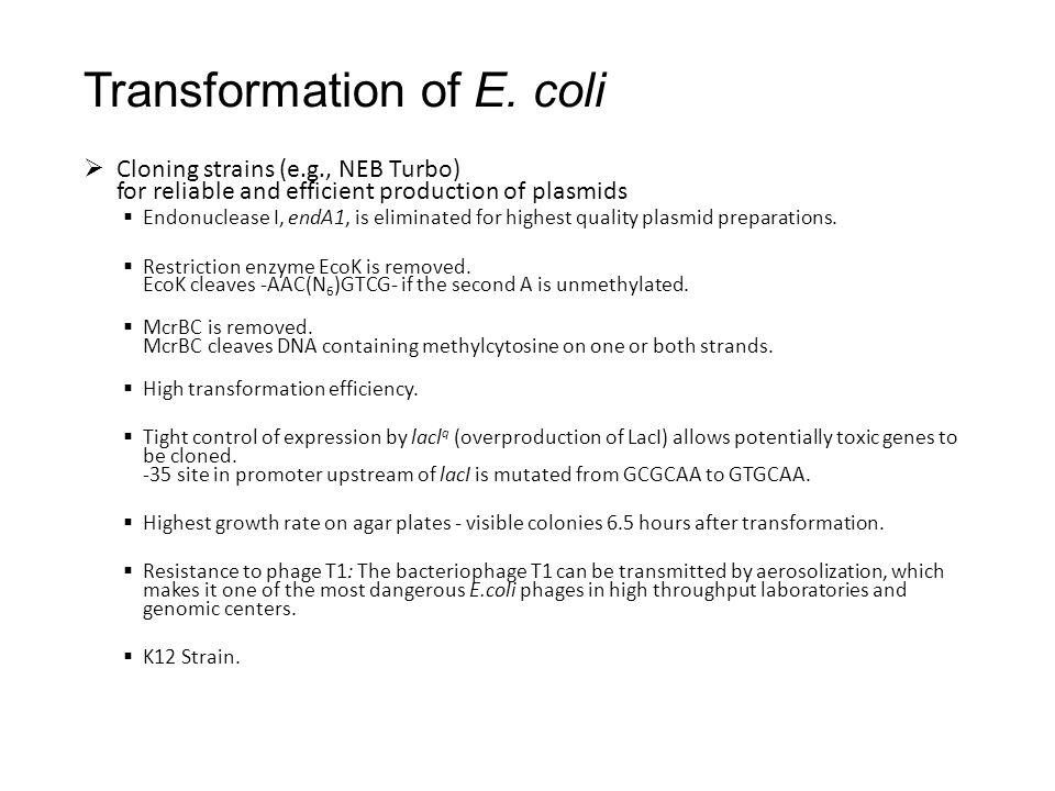 Transformation of E.