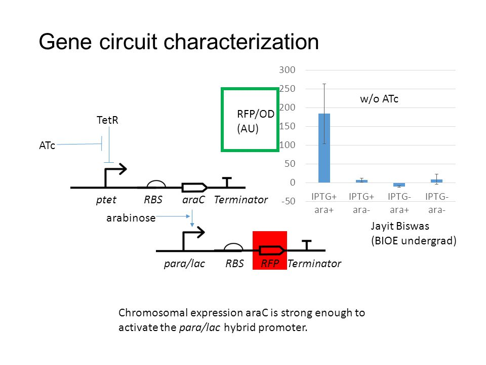 Gene circuit characterization ptet RBS araC Terminator para/lac RBS RFP Terminator TetR ATc arabinose RFP/OD (AU) w/o ATc Chromosomal expression araC is strong enough to activate the para/lac hybrid promoter.