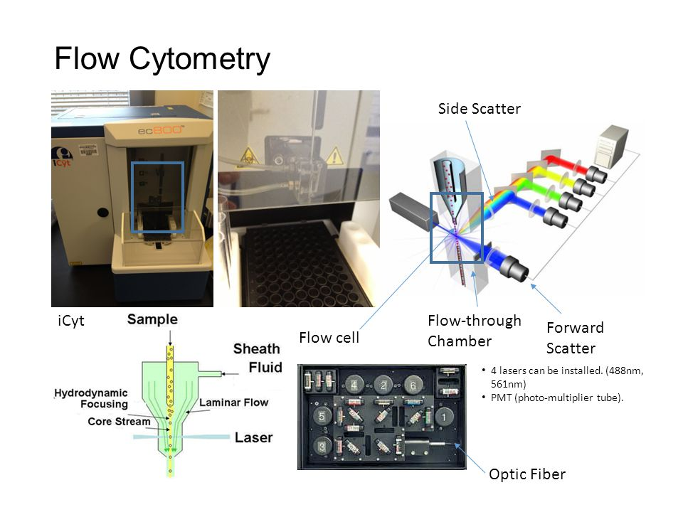 Flow Cytometry Flow-through Chamber Flow cell Forward Scatter Side Scatter iCyt 4 lasers can be installed.