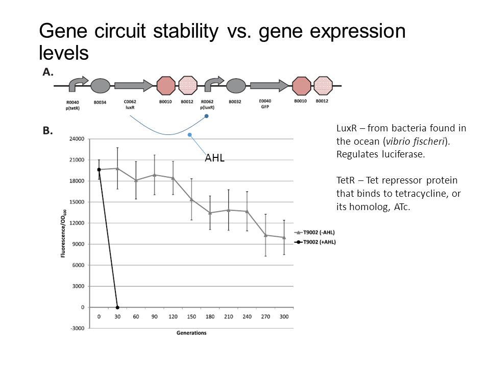 Gene circuit stability vs. gene expression levels AHL LuxR – from bacteria found in the ocean (vibrio fischeri). Regulates luciferase. TetR – Tet repr