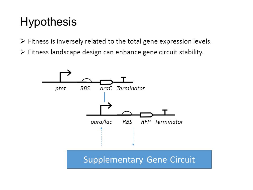 Hypothesis  Fitness is inversely related to the total gene expression levels.  Fitness landscape design can enhance gene circuit stability. ptet RBS