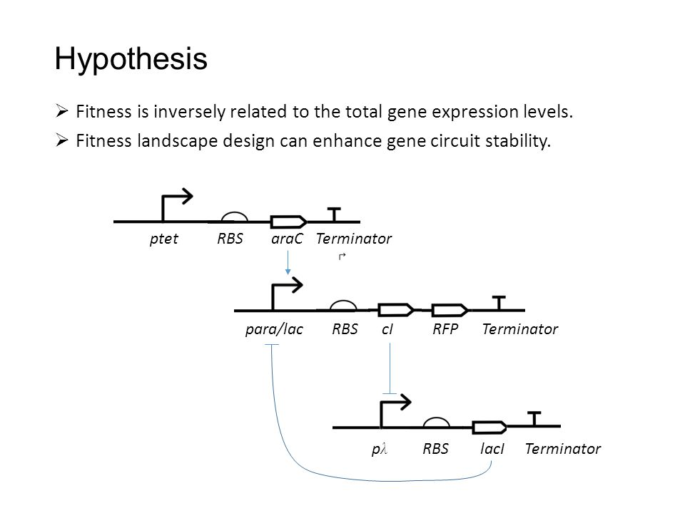 Hypothesis  Fitness is inversely related to the total gene expression levels.