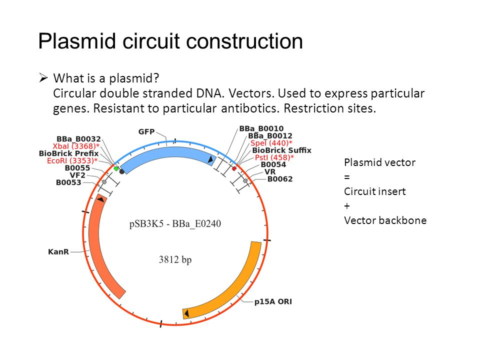 Plasmid circuit construction  What is a plasmid? Circular double stranded DNA. Vectors. Used to express particular genes. Resistant to particular ant