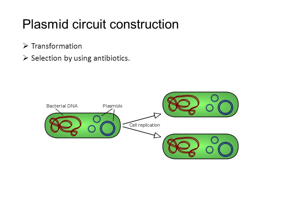 Plasmid circuit construction  Transformation  Selection by using antibiotics.