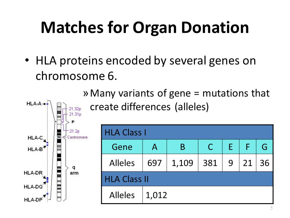 Matches for Organ Donation HLA proteins encoded by several genes on chromosome 6.